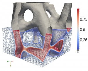 Phase-field representation of a microscopic fragment of bone